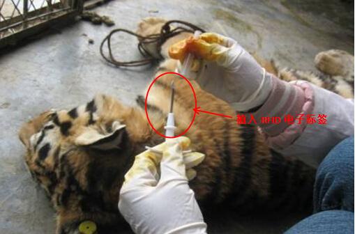 rfid动物管理_rfid动物识别
